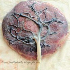 treeoflifebirthphotography.com